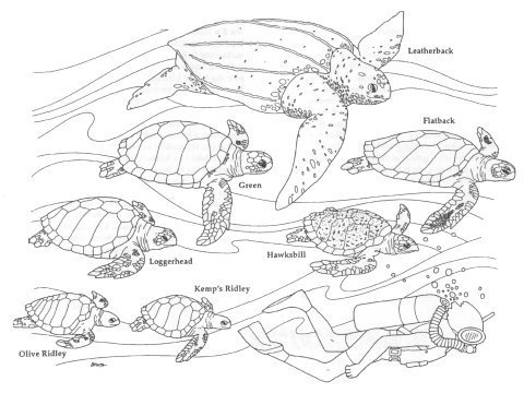 realistic turtle coloring pages - elv omalov nky d tsk n pady